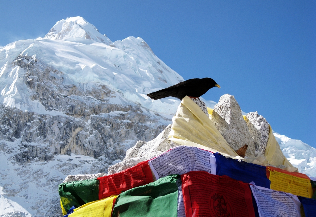 Alpine Chough at our puja, Everest Basecamp