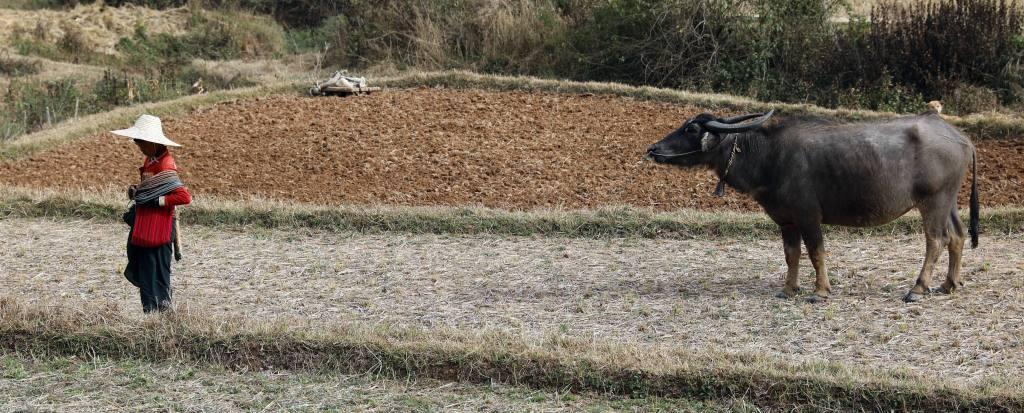 Farmer, Kalaw to Inle trek