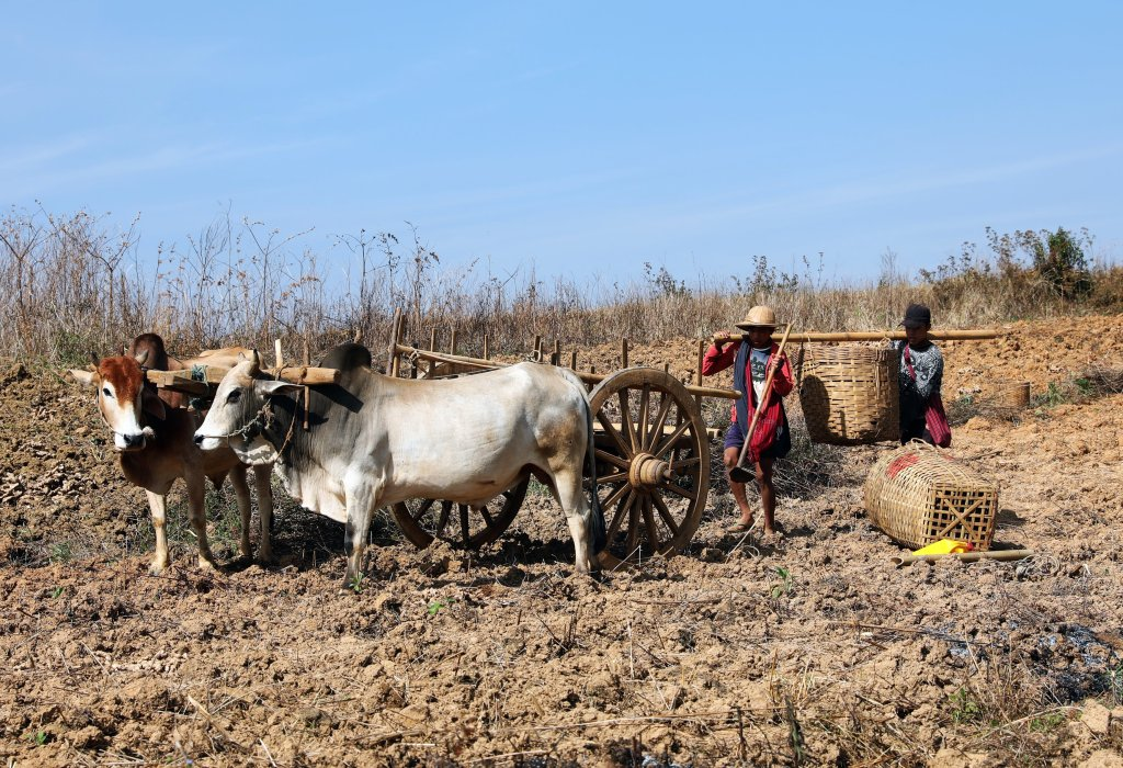 Farmers in the Shan Highlands, Kalaw to Inle trek