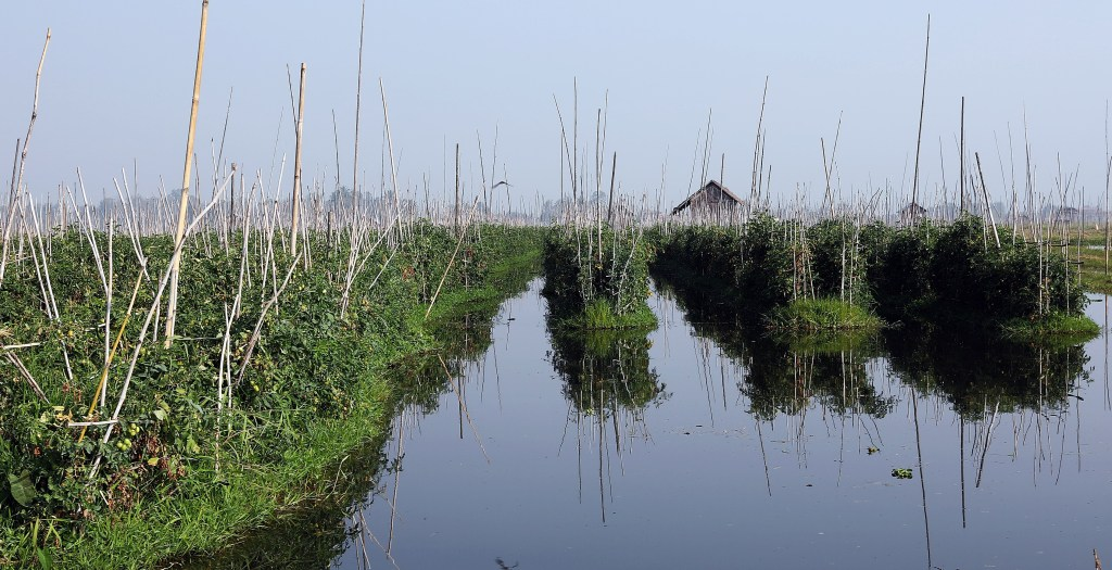 Floating gardens, Inle Lake