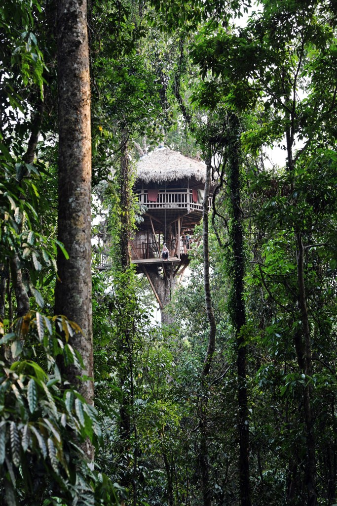 Treehouse seen from a zipline, Nam Kan National Park