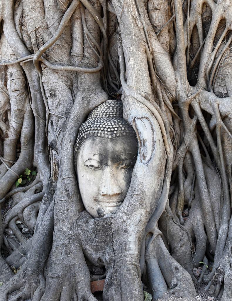 Buddha Head in Banyan Tree Roots, Wat Mahatat, Ayutthaya