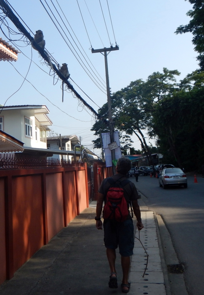 Monkeys, Phet Buri