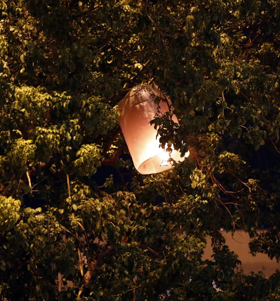 Some lanterns got stuck in the surrounding trees