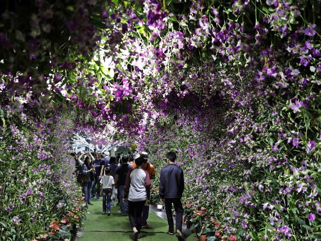 Tunnel made of Orchids, Flower Festival, Chiang Rai