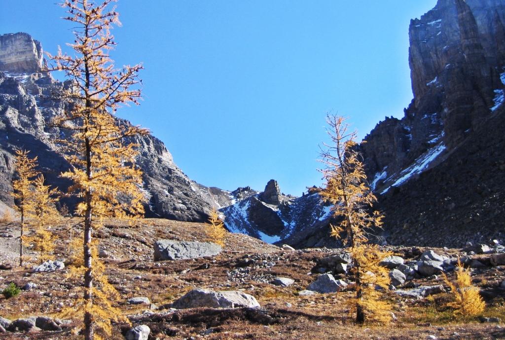 Larch Valley, Banff National Park