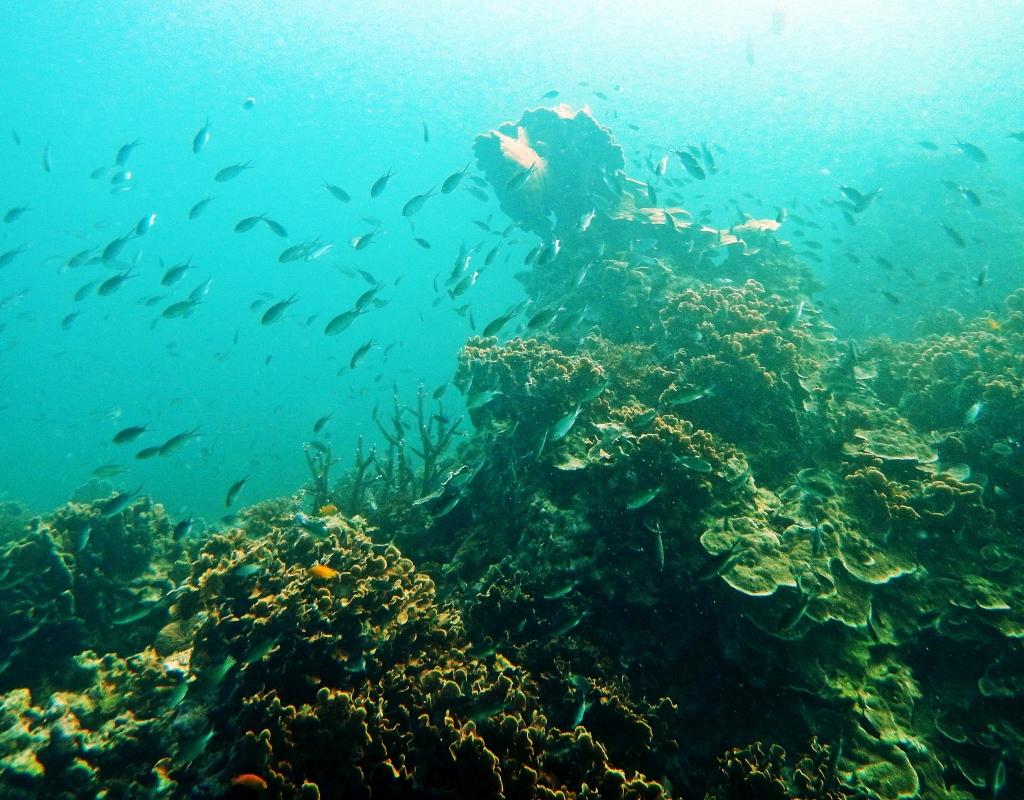 Coral Reef Fish, Koh Tao