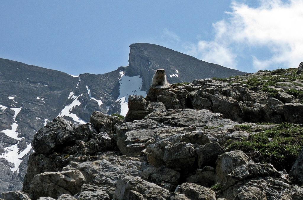 Marmot, Cascade Mountain, Banff National Park