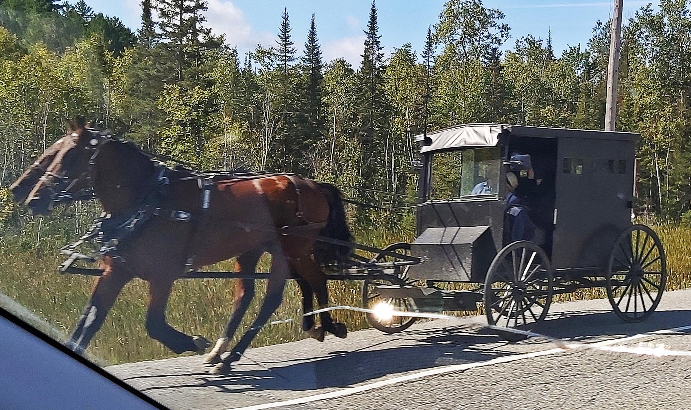 Mennonites, Algoma District, Ontario
