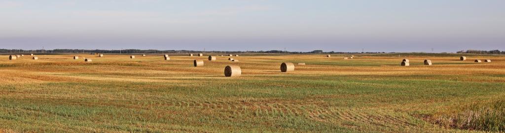 Hay bails, Prairies